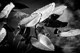 Crocodile - Everglades National Park - Unesco World Heritage Site - Florida - USA Fotografie-Druck von Philippe Hugonnard