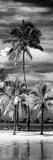 Paradisiacal Beach overlooking Downtown Miami - Florida Reproduction photographique par Philippe Hugonnard