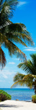 Access to the Beach Paradise - Florida - USA Photographic Print by Philippe Hugonnard