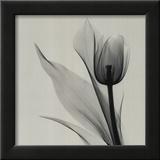 Tulip Prints by Marianne Haas