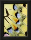 Wing of a Butterfly Framed Photographic Print by Darrell Gulin