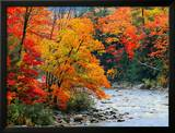 Stream in Autumn Woods Poster