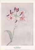 Lily Impressão colecionável por Piet Mondrian
