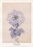Chrysanthemum Impressão colecionável por Piet Mondrian