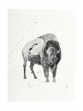 Watercolor Buffalo Premium Giclée-tryk af Ben Gordon