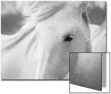 Sweet Horse Kunstdruck von Marco Carmassi