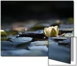 Reflektionen im Teich Poster von Ursula Abresch