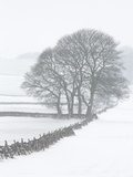 White Out Metal Print by Doug Chinnery
