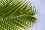 Leaf of a Palm Tree at a Beach on the Caribbean Island of Grenada Photo by Frank May