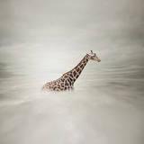Giraffe in the Sky Fotografisk tryk af  mike_experto