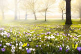 Abstract Sunny Beautiful Spring Background Stampa fotografica di  Konstiantyn