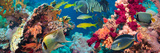 Colorful Underwater Reef with Coral and Sponges Photographic Print by  Irochka