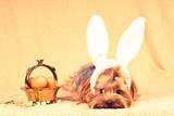 Cute Dog like Easter Bunny Photographic Print by  GrasePhoto