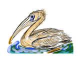Hand Draw Bird Pelecanidae Affiches par  jim80