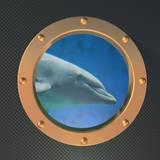 Dolphin on the Porthole Fotografisk trykk av  koufax73