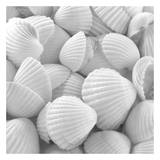 Shells 3 Posters