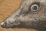 Graffiti Fotografie-Druck von  Laiotz