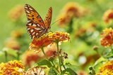 Lacewing Butterfly Photographic Print by Gary Carter