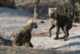 Spotted Hyena Cubs Lámina fotográfica por Sergio Pitamitz