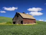 Old Red Barn in a Field of Spring Wheat Photographic Print by Terry Eggers