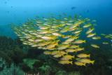 Big School of Yellow Snappers Photographic Print by Bernard Radvaner