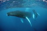 Humpback Whale Lámina fotográfica por Reinhard Dirscherl
