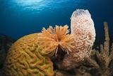 Caribbean Coral Reef Fotografie-Druck von Reinhard Dirscherl