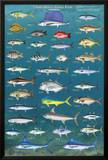 Salt Water Game Fish Poster