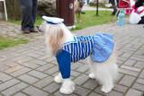 Chinese Crested Dog Fotografisk trykk av  rook76