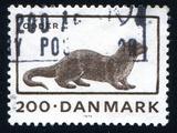 Otter Fotografie-Druck von  rook76
