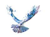 Vogel Kunst von  okalinichenko