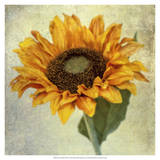 Lush Vintage Florals I Prints by Honey Malek