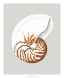 Nautilus Giclee Print by Michael Willett