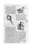 Birds, 1675 Giclee Print by Athanasius Kircher
