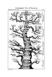 Haeckel's Scheme of Evolution Displayed in the Form of a Tree, 1910 Giclee Print by Ernst Heinrich Philipp August Haeckel