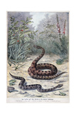 Snakes and Poisonous Plants, 1897 Giclee Print by F Meaulle