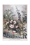 Harmful Plants, 1897 Giclee Print by F Meaulle