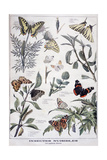 Harmful Insects: Daylight Butterflies, 1897 Giclee Print by F Meaulle