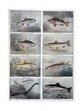 Freshwater Fish, 1897 Gicléedruk van F Meaulle