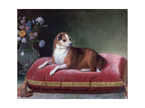 The Bitch on a Cushion, C1694-1735 Giclee Print by Jean Ranc