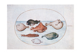 Fish, 16th Century Giclee Print by Joris Hoefnagel