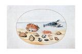 Shells and Shellfish, 16th Century Giclée-tryk af Joris Hoefnagel