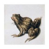 Green Frog, 16th Century Giclee Print by Joris Hoefnagel