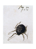 Female Spider, 1578 Giclee Print by Joris Hoefnagel