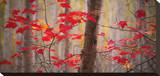 Autumn Leaves Near The Great Meadow Stretched Canvas Print by Michael Hudson