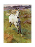 Study from Life for Colt Hunting in the New Forest, 1899 Giclee Print by Lucy Elizabeth Kemp-Welch