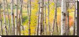 Autumn Woods, Acadia Stretched Canvas Print by Michael Hudson