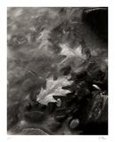 Flow Samlertryk af Andrew Geiger