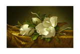 Magnolias on Gold Velvet Cloth, C. 1889 Gicléedruk van Martin Johnson Heade