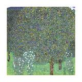 Rose Bushes under the Trees, C. 1905 Giclée-tryk af Gustav Klimt